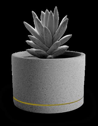 home-bg-plant